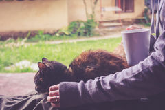Cat Is Resting. Tabby Cat Is Resting And Hands Holding A Cup Of Young Woman royalty free stock images
