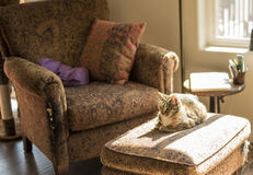 Cat Resting on Tattered Furniture Royalty Free Stock Photo