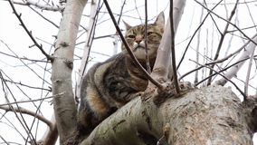 Cat resting. On a tree branch