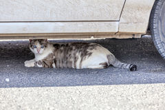 Cat resting under a car in the heat Royalty Free Stock Photography