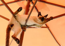 Cat resting under parasol Royalty Free Stock Image