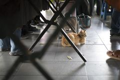 Cat resting under the table at a busy fresh market. A cat under a tablein a busy market stock image