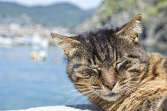 Cat while resting in Vernazza harbor Royalty Free Stock Photo