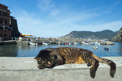 Cat while resting in Vernazza harbor Royalty Free Stock Images