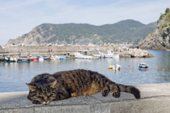Cat while resting in Vernazza harbor Stock Images