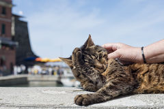 Cat while resting in Vernazza harbor Royalty Free Stock Photos