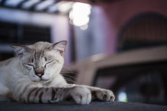 Cat resting on a wall Royalty Free Stock Photo