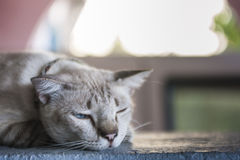 Cat resting on a wall Royalty Free Stock Photography