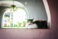 Cat resting on a wall Stock Photos