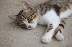 Cat resting stock image