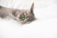 Cat resting on a white bed Royalty Free Stock Photos