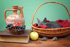 Cat resting in a wicker basket Stock Photo