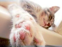 Cat resting on the windowsill stock image