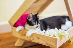 A cat is resting in a wooden pallet box with artificial flower. stock image