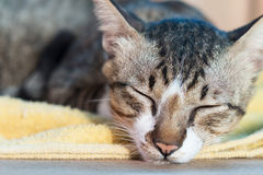 Cat resting. On yellow carpet Stock Photography