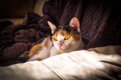 Cat Resting in Zonlicht Stock Foto