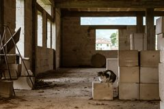 Industrial stray cat stock image