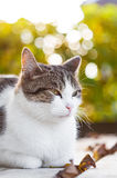 Cat rests with fallen leaves Royalty Free Stock Photo