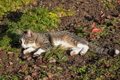 Cat rests in the field royalty free stock images