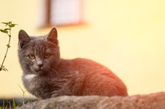 Cat rests in the mountain Stock Images