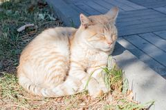 Cat rests near the curb on the street stock photos