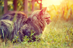 The cat rests in the yard Royalty Free Stock Photography