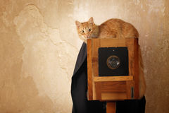 Cat retro photographer with vintage camera. In over grunge wall background Royalty Free Stock Images