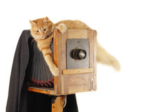 Cat retro photographer with vintage camera. In studio isolated on white background Royalty Free Stock Photo