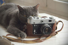 Cat retro photographer or will now fly out birdie Royalty Free Stock Images