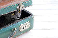 Cat retro tourist Royalty Free Stock Photo