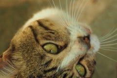 Cat. Reverse facing cat Royalty Free Stock Photos
