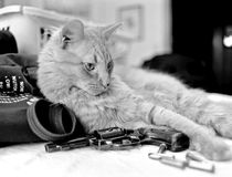 Cat with a revolver. A large domestic cat reclining with a handgun and ammunition royalty free stock photo