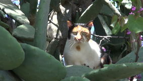 Cat in Rhodes  garden with cactus opuntia and redbud tree stock video footage