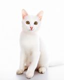 Cat with ribbon Royalty Free Stock Photos