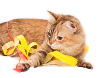 Cat and ribbons Royalty Free Stock Images