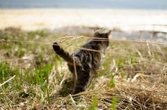 Cat on the river bank stock image