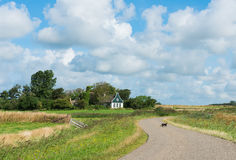 Cat on Road on island Texel Royalty Free Stock Image