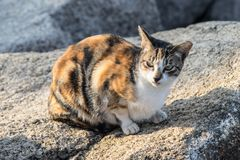 Cat on rock royalty free stock photo