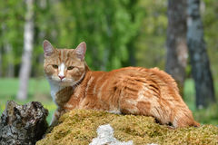Cat on a rock. A cat lying on a rock Royalty Free Stock Image