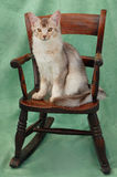 Cat on rocking chair Stock Images