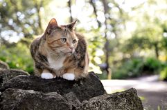 Cat on the Rocks Stock Images
