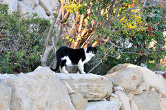Cat on the rocks. Homeless cat on the rocks Royalty Free Stock Photography