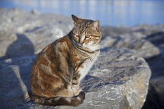 Cat at the rocks near the sea Stock Photo