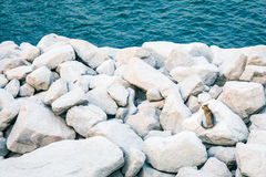 Cat on rocks, next by the sea Royalty Free Stock Photos