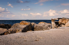 Cat On Rocky Shoreline Royalty Free Stock Images