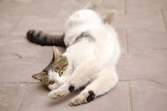 Cat rolling on ground Stock Photos