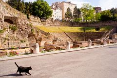 Cat, Roman Theater in Trieste Stock Image