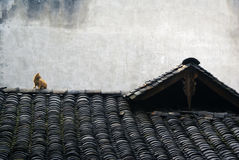 A cat on roof. A cat sitting on roof Stock Photo
