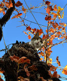Cat in the roof. Young cat climbed to the roof of a house and a tree, flying from dog Royalty Free Stock Photo
