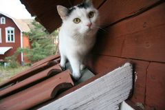 Cat of roof royalty free stock images